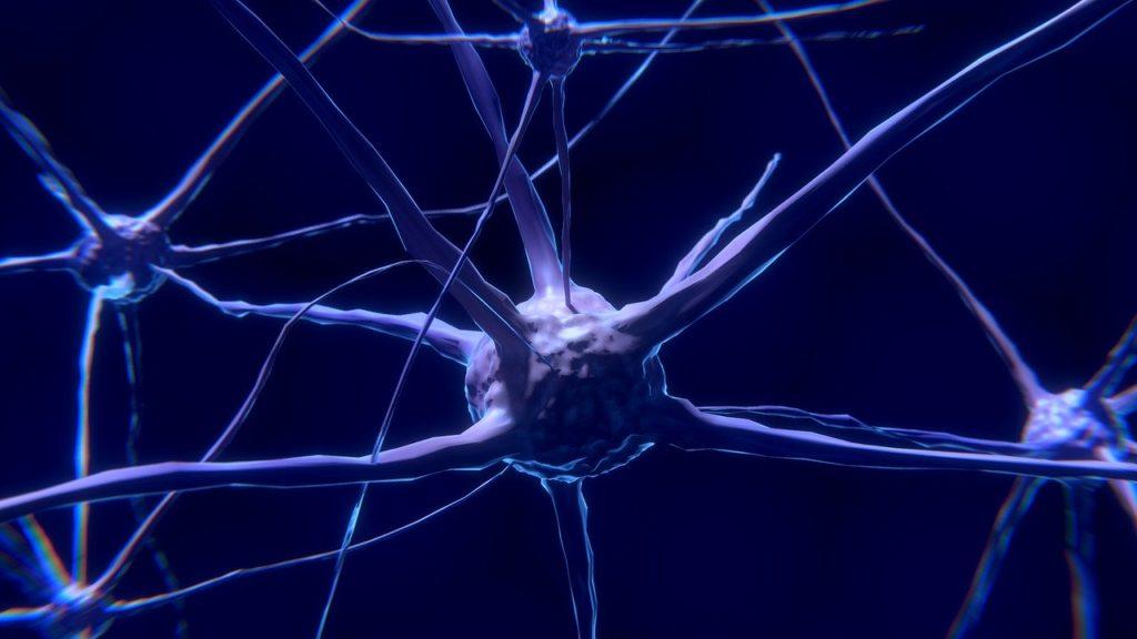 Wir können neue Nervenzellen bilden.
