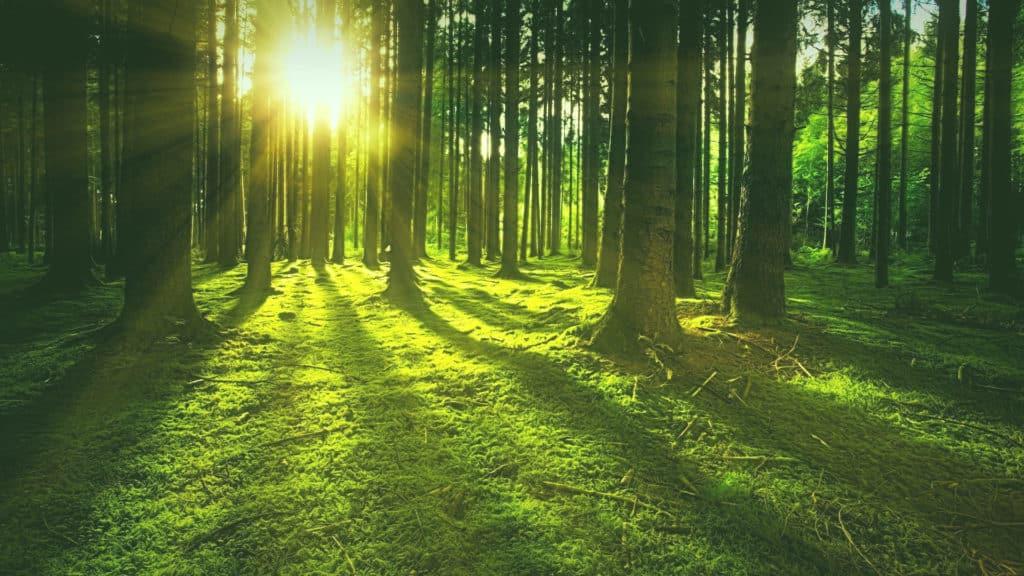 Allein das Grün im Wald aktiviert unseren Parasympathikus so sehr, dass dass Stresshormone wie Cortisol und Adrenalin stark zurückgehen. So regenerieren wir unser Nervensystem im Wald.