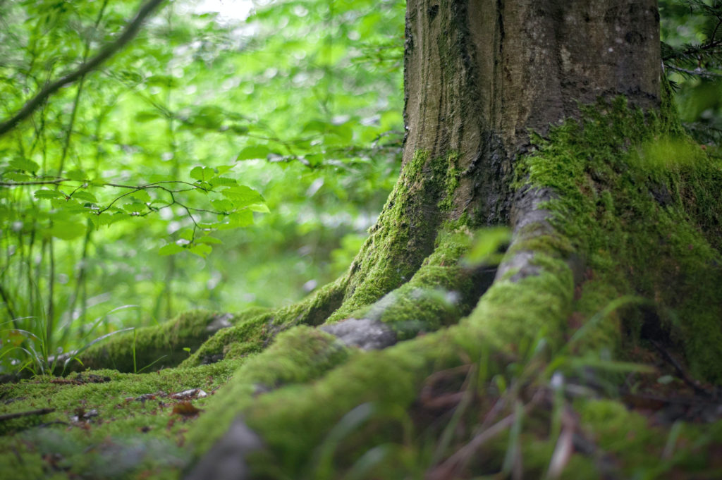 Waldbaden - Ruhe als Medizin - easy-50