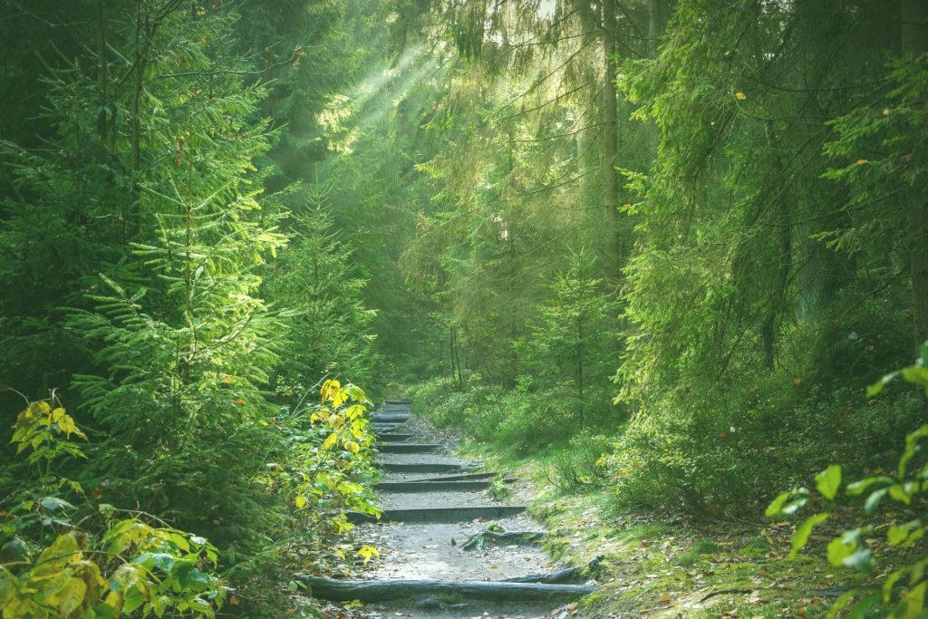 Waldbaden - ein ausgedehnter Waldspaziergang aktiviert Killerzellen gegen Krebs