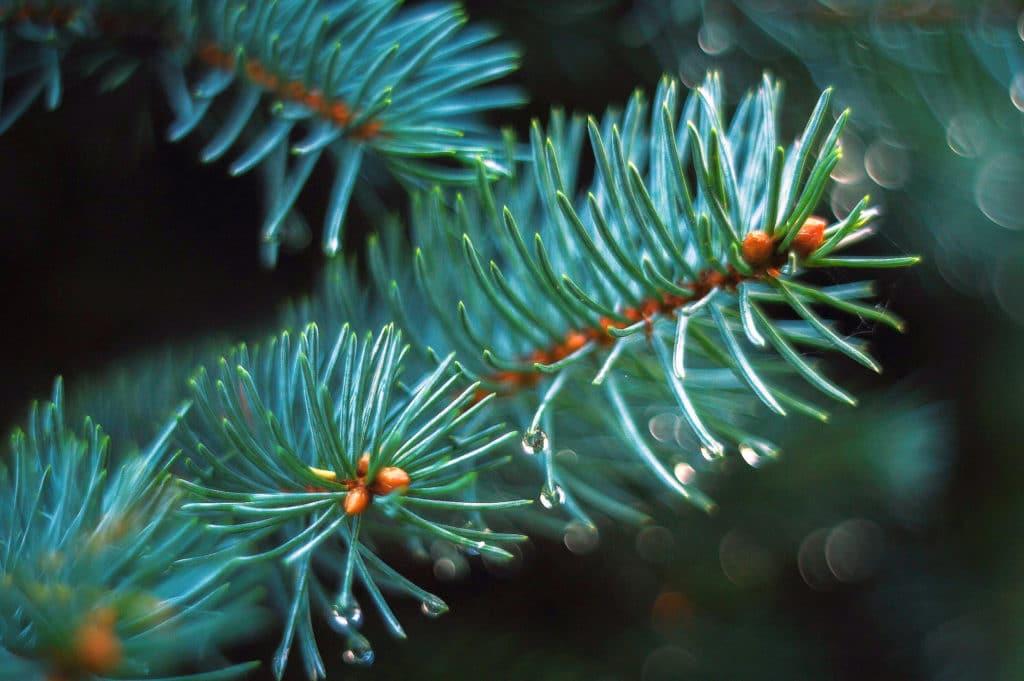 Waldbaden Terpene und Phytonzide