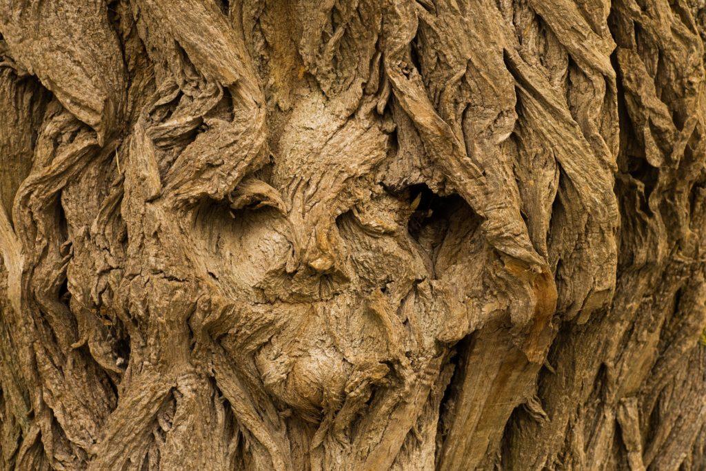 Waldbaden - die Stimulation der Sinne im Wald hat einen positiven Effekt auf Demenz und Alzheimer