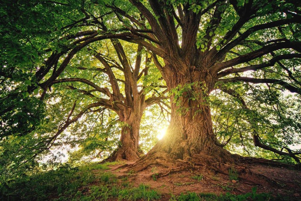 Der Wald - unser Beschützer